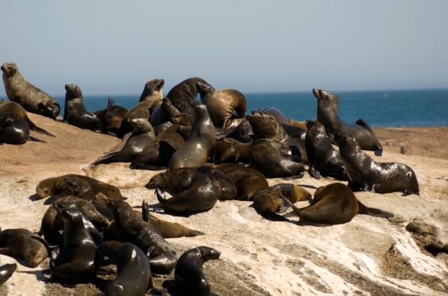 Seal Island, South Africa - Seals