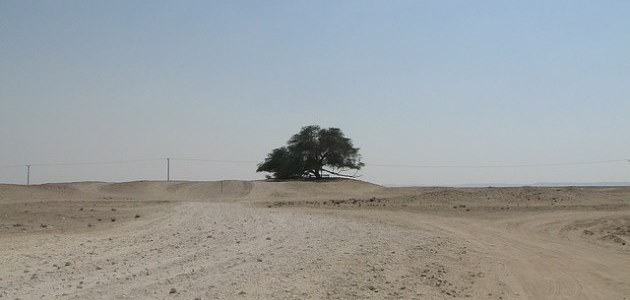 Tree of Life: The tree that grows in the middle of a desert