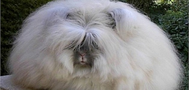 The world's furriest and fluffiest animals