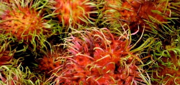 Rambutan   Unusual fruit from around the world