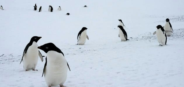 6 animals that like it cold