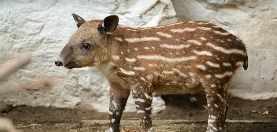 Baby animals who look nothing like their parents