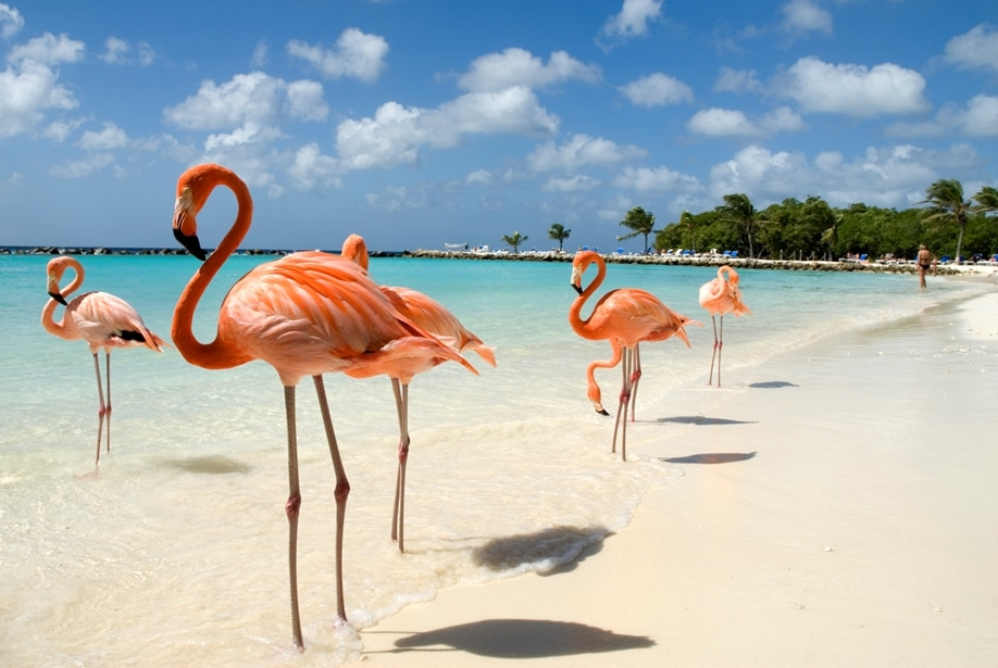 Things you probably didn't know about flamingos