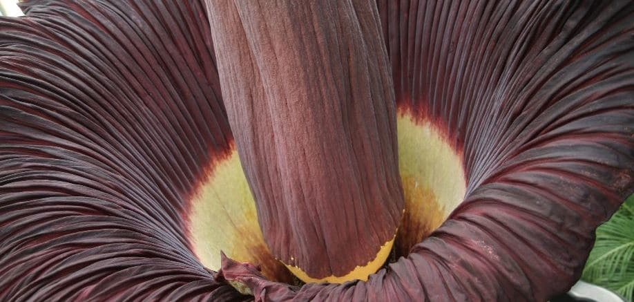 5 plants you probably wouldn't want in your garden