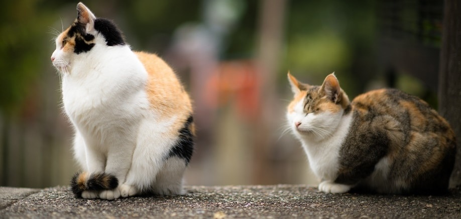Tashirojima: The Japanese island that's been taken over by cats