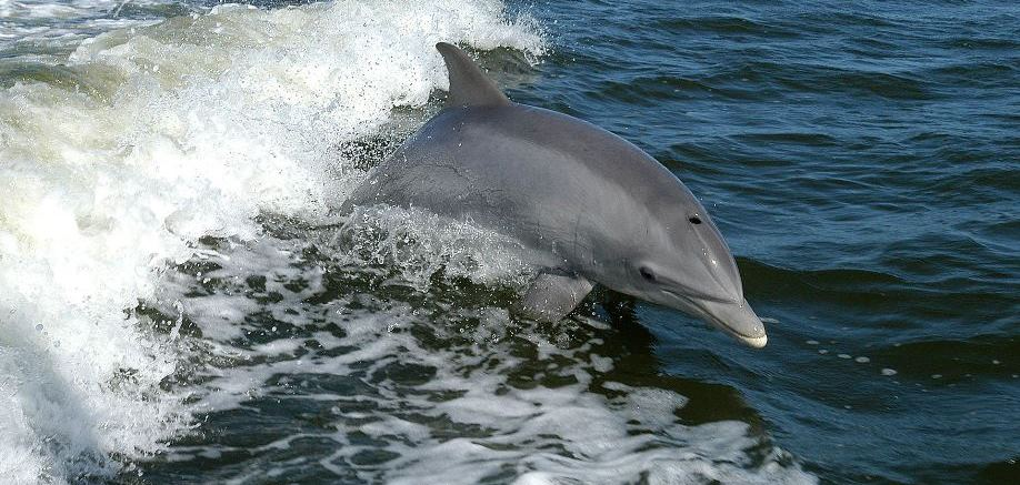 7 things you might not know about dolphins