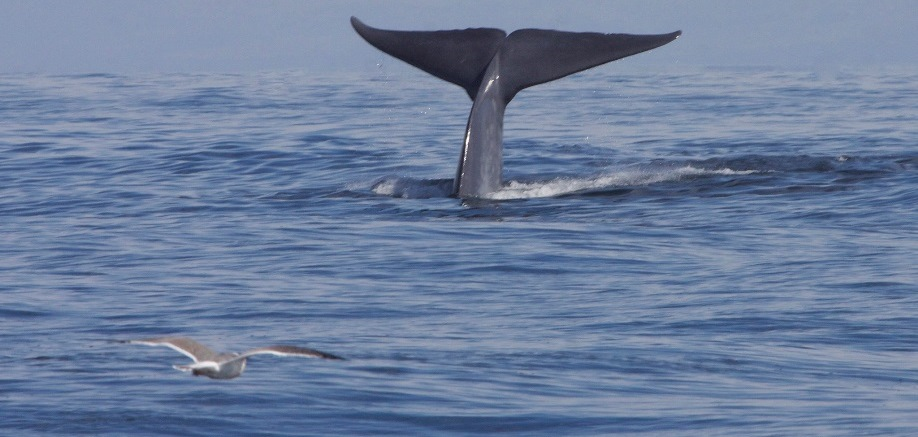 4 facts about whales you may not know