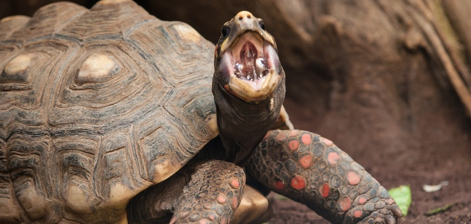 Everything you've always wanted to know about turtles, tortoises and terrapins