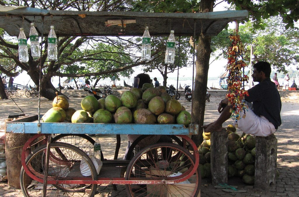 Coconuts: What are they and what do they do?