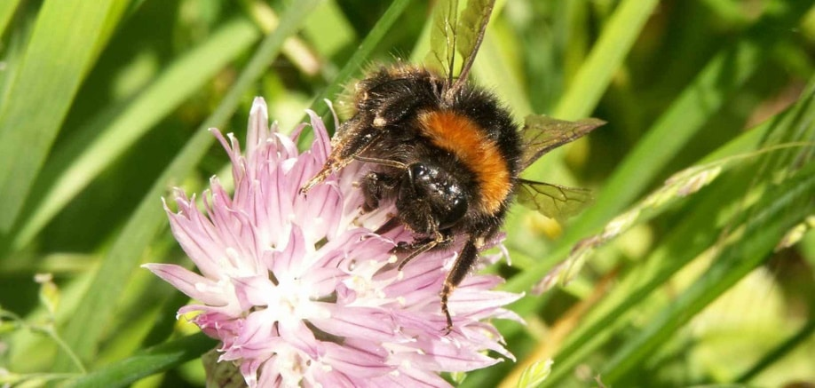 Almost everything you always wanted to know about bees