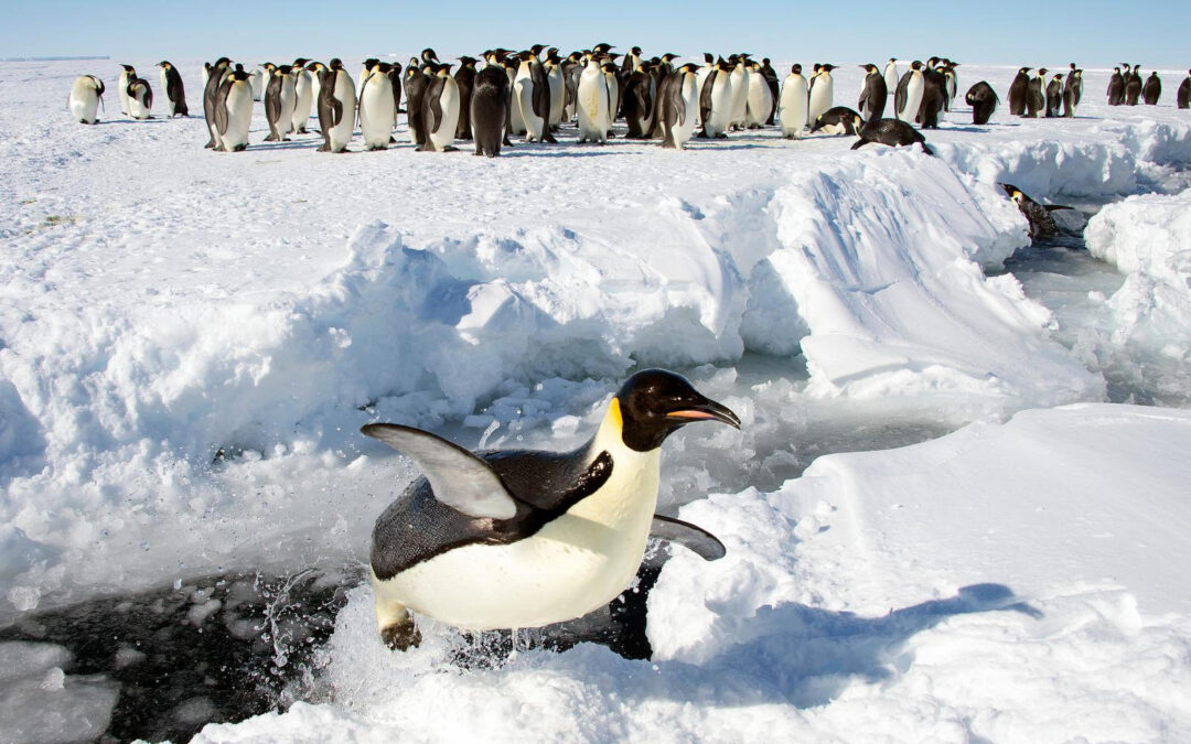 Everything you've always wanted to know about penguins