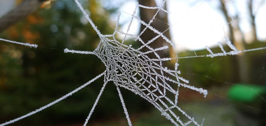 Everything you always wanted to know about spiders (and maybe some stuff you didn't)