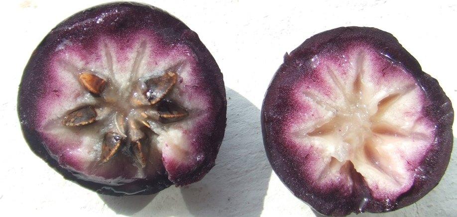 Vietnam's milky breast fruit