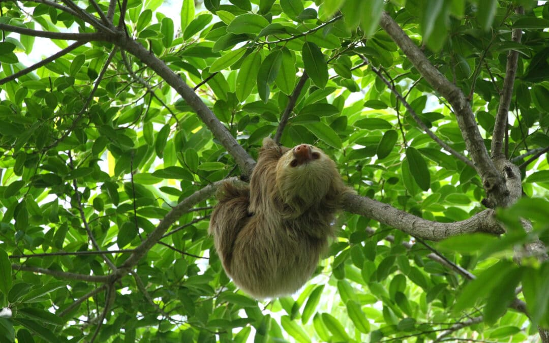 Hanging with the sloths in Costa Rica
