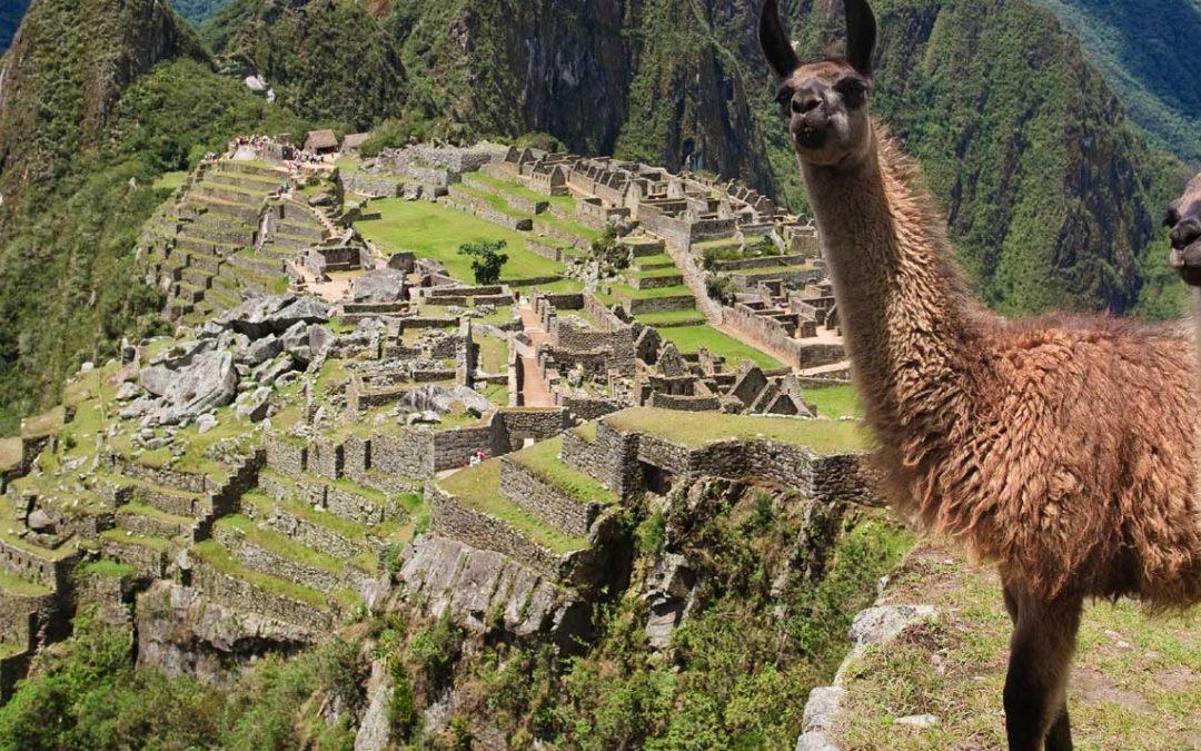 Llamas: A fluffy cross between a sheep and a giraffe